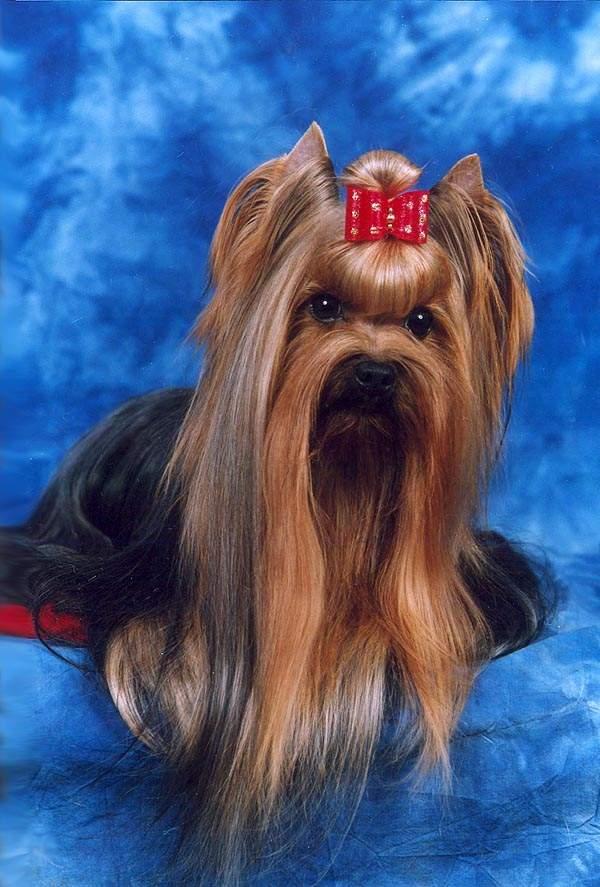 Onofrio Dog Shows